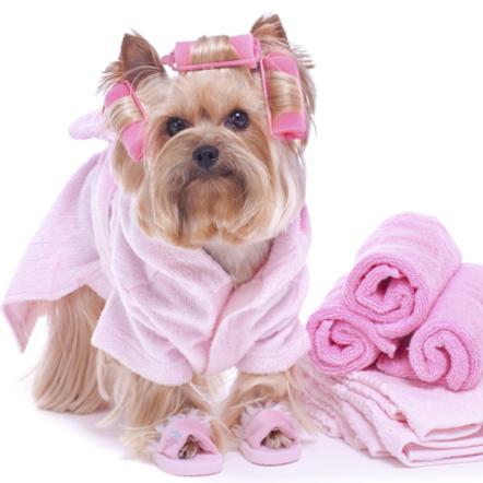 Ingrijirea blanosului la salonul de cosmetica canina