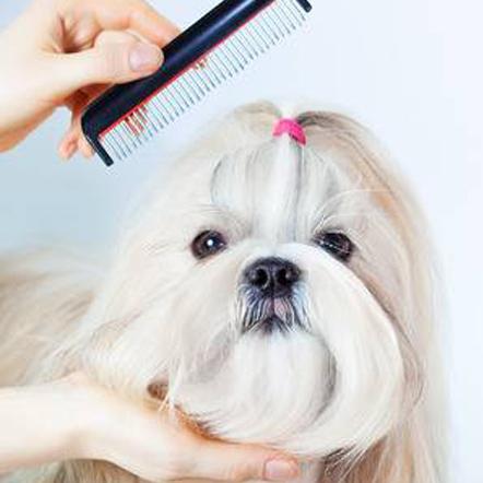 Frizerie canina profesionala cu oferte speciale