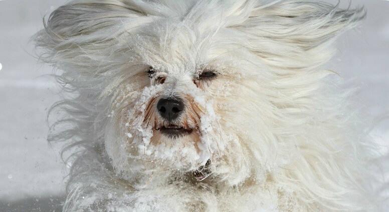 Tunsul cainilor in timpul sezonului rece