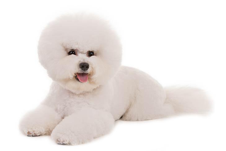 frizerie canina pentru caini de talie mica