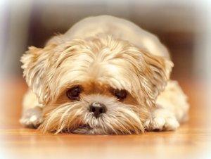 cum reactioneaza cainii la stres