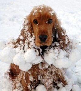 Vizita la salonul de frizerie canina in timpul iernii