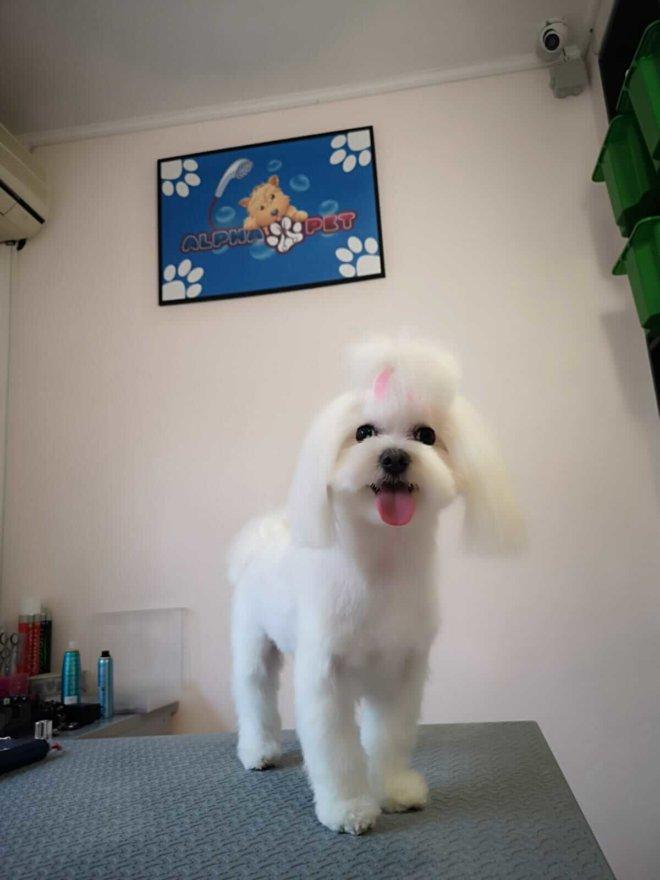 Servicii de calitate cosmetica canina