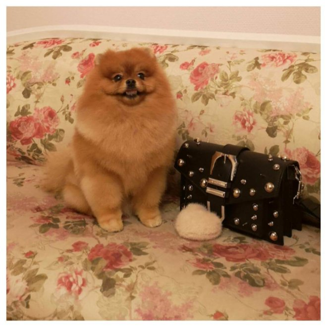 servicii profesionale cosmetica canina