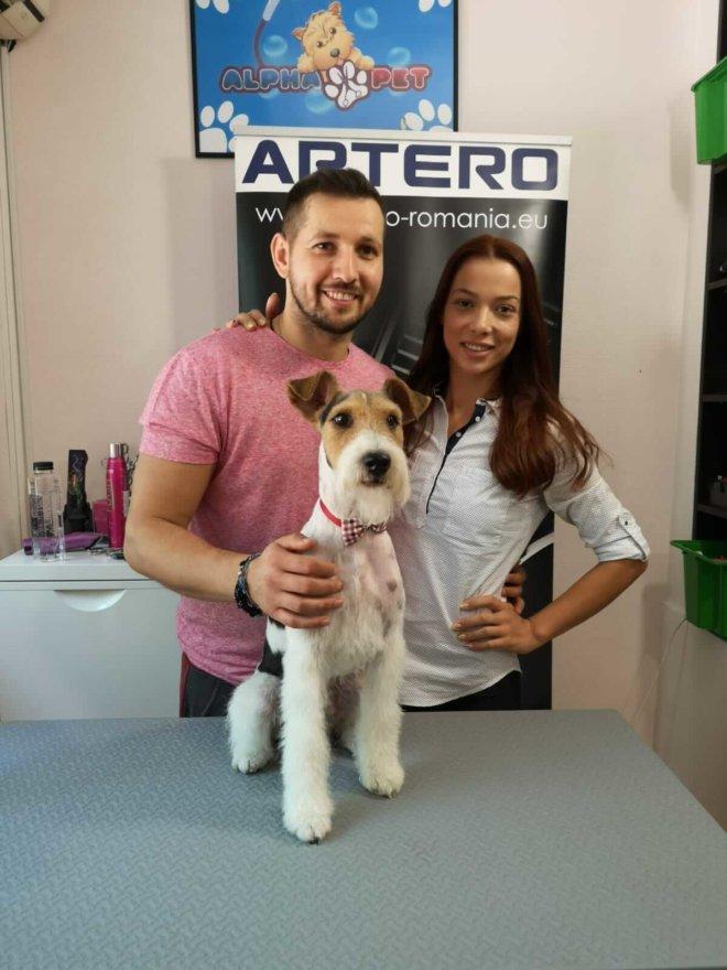 servicii profesionale tuns caini si frizerie canina