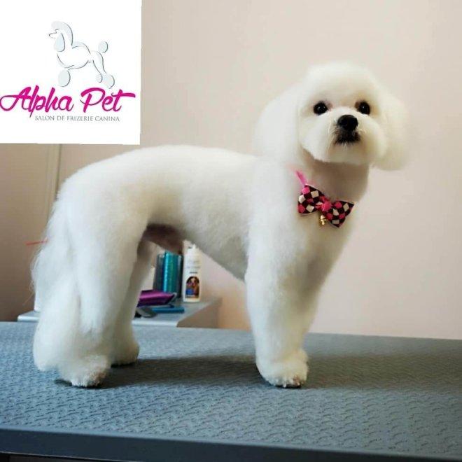 servicii cosmetica canina