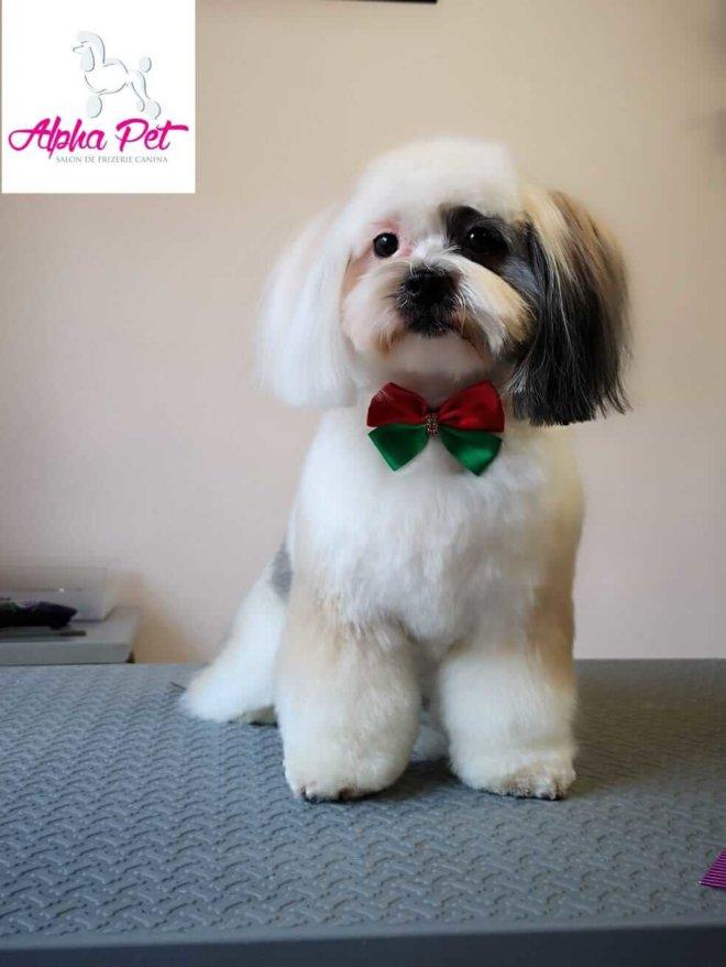 servicii frizerie si cosmetica canina