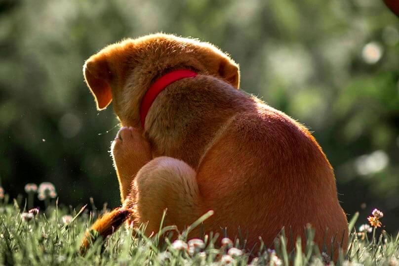Tratamente naturale pentru cainii care se scarpina excesiv